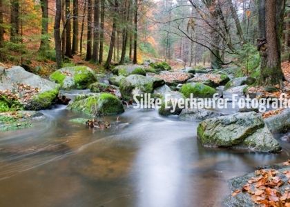 Naturschutzgebiet Hölle, Bayerischer Wald.